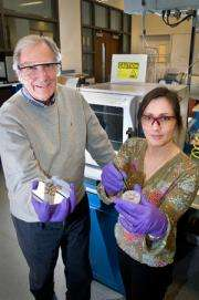 A Straightforward Solution for Increasing Solar Cell Performance