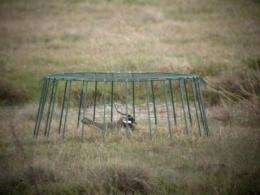 Cages and emetics rescue wading birds