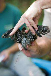 Free as a bird? Researchers find that man-made development affects bird flight patterns and populations
