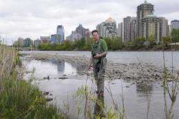 Gender-bending fish on the rise in southern Alberta