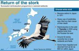 Graphic on the reintroduction programme of the oriental white stork to the Japanese town of Toyooka