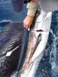 Growing hypoxic zones reduce habitat for billfish and tuna