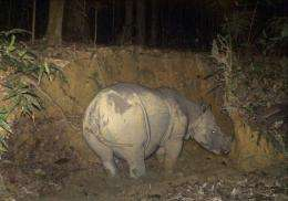 Malaysian wildlife officials plan to trap a rare female Borneo rhino caught on camera to mate with a rescued lone male