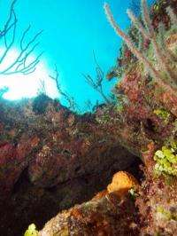 New study shows marine 'networks' can protect fish stocks