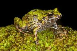 Rescue missions underway to save Haiti's species from mass extinctions