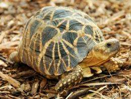 Shellshock: New report lists 25 most endangered turtle species