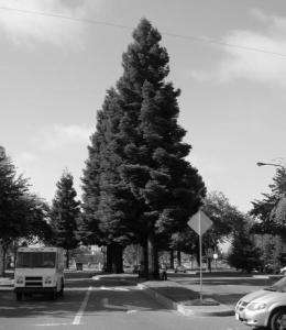 Trees provide big savings for every dollar invested by increasing property values, saving energy
