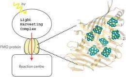 Untangling the quantum entanglement behind photosynthesis