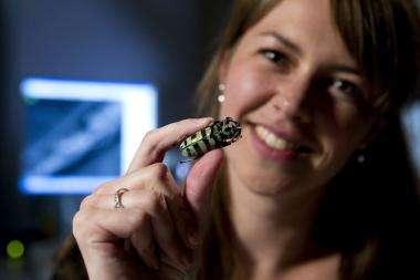 Futuristic computing designs inside beetle scales