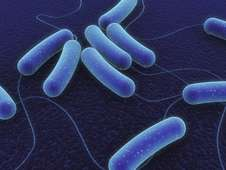 Breakthrough in tracking a cause of chronic infections