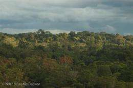 Scientists identify Ecuador's Yasuni National Park as one of most biodiverse places on earth