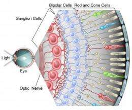 From eye to brain