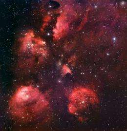 On the trail of a cosmic cat