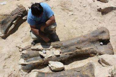 Palaeontologists have found the fossiled thigh bone of a dinosaur that is almost two metres in length