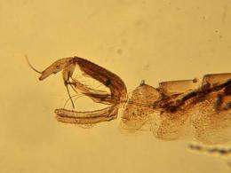 Sand fly barcoding in Panama reveals Leishmania strain and its potential control