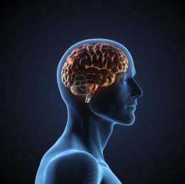 Schizophrenia drugs raise the volume of a key signaling system in the brain