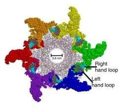 Three dimensional structure of the DNA packaging nanomotor of bacterial virus phi29 that contains six RNA molecules.(PU)