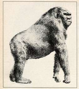 Researchers discover largest primate that ever lived