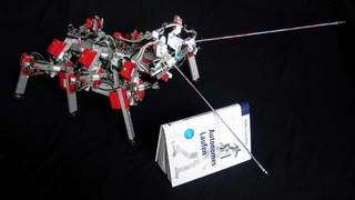 Feelers for insect robots