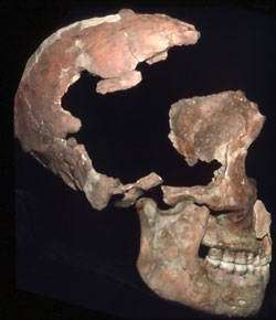 Oldest Fossil Protein Sequenced