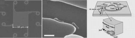 New motor first to be powered by living bacteria