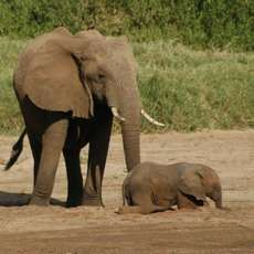An Elephant Tail: New Method Tracks Endangered Critters