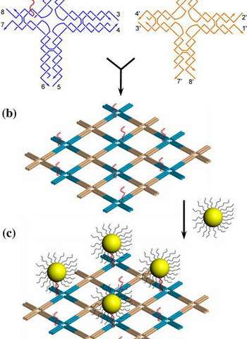 Organizing Gold Nanoparticles with DNA