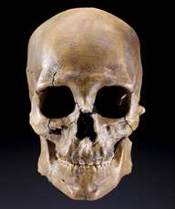 Kennewick Man's skull, front view.
