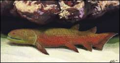 An artist's impression shows a 380 million year old Devonian fish