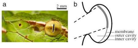 Snakes' heat vision enables accurate attacks on prey