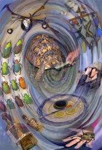 A human taste for rarity spells disaster for endangered species