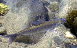 Loss of just one species makes big difference in freshwater ecosystem, study finds