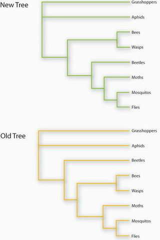 Changes to the insect family tree.