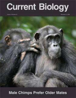 Male chimpanzees prefer mating with old females