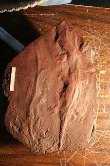 Ancient Amphibians Left Full-Body Imprints