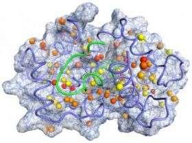 Penn Researchers Probe Proteins