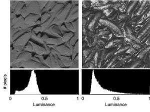 Study shows how brain interprets surfaces