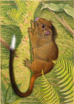 Scientists discover new species of distinctive cloud-forest rodent