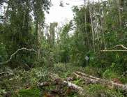 'Cyclone science' shows rainforest impacts and recovery