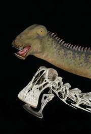Dinosaur from Sahara ate like a 'Mesozoic cow'