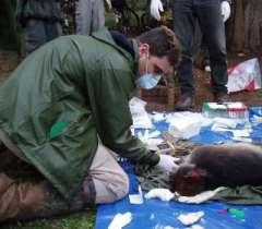 E. coli bacteria migrating between humans, chimps in Ugandan park