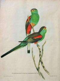Extinct parrot resurfaces in Aberdeen