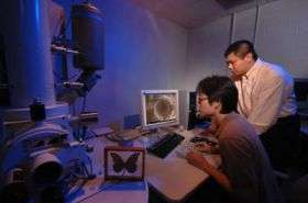 From moths and cicadas come improvements to solar cells