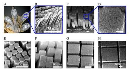 Nanotube adhesive sticks better than a gecko's foot