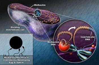 One Species' Genome Discovered Inside Another's