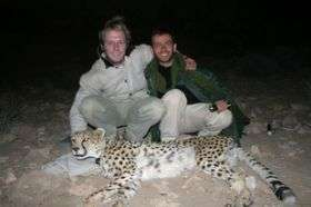 In Iran, cheetahs collared for the first time