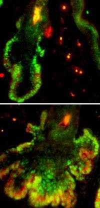 Initial trigger is not enough to determine a stem cell's fate