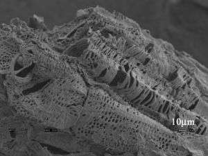 Magnified Image of Cornstalk Particle