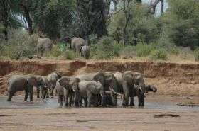 Social standing influences elephant movement