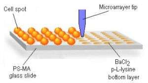 Stem Cell Microarray Platform